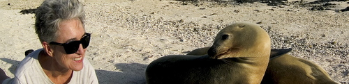 Image of sea lion in Galapagos