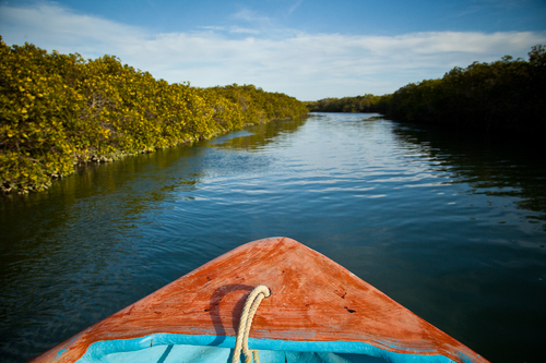 Image of boat down mangroves in Central America
