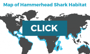 map of hammerhead sharks