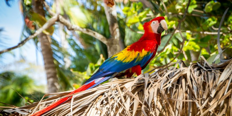View a macaw on you next conservation vacation