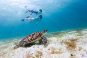 kids swimming with a hawksbill sea turtle on a top family-friendly vacation