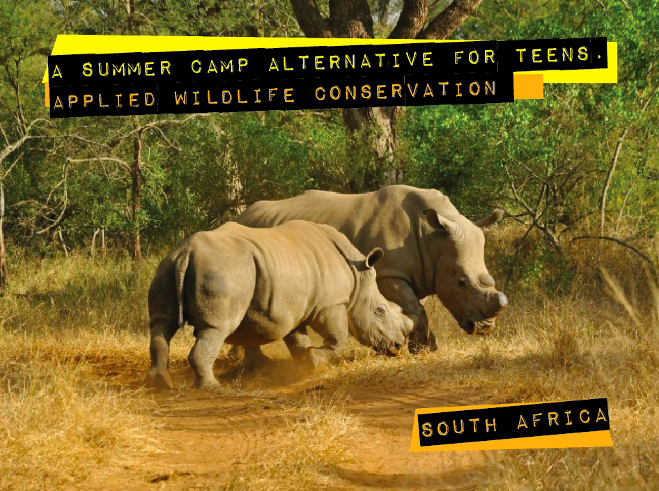 Rhinoceros and a wildlife camp for teens in South Africa