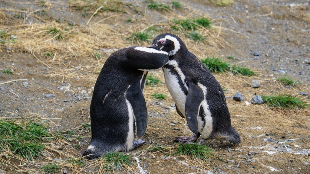 Two penguins celebrating World Penguin Day