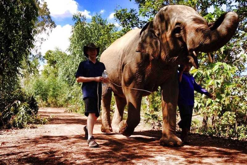 Best Elephant Conservation Trips in Thailand
