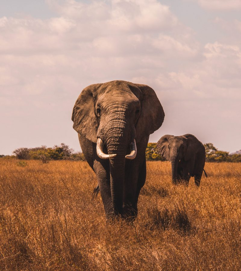 See elephants on a wild animal safari