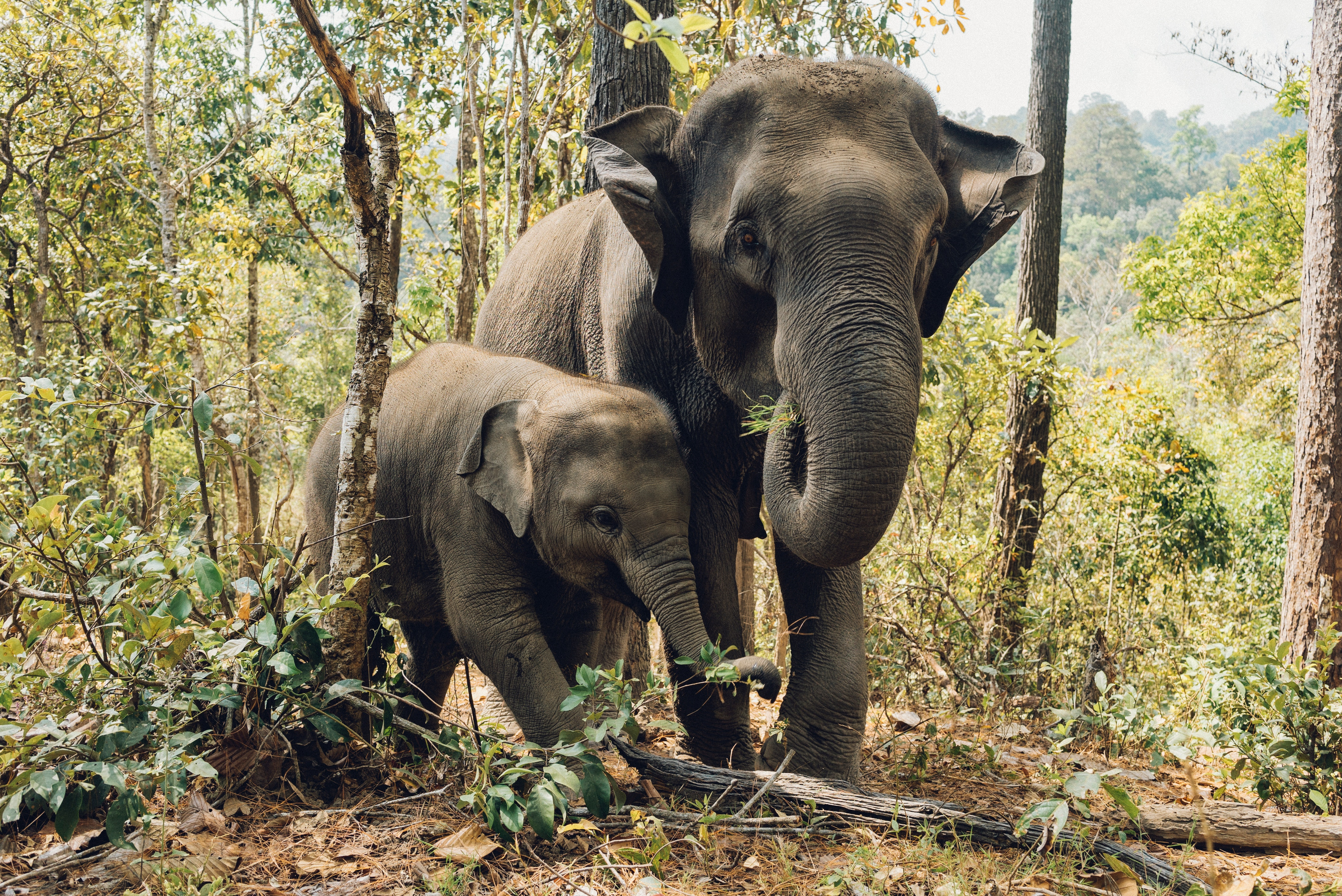 elephants on a wildlife tour in thailand