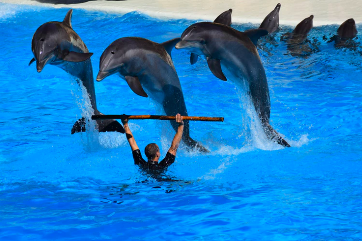 Can bans captive dolphins