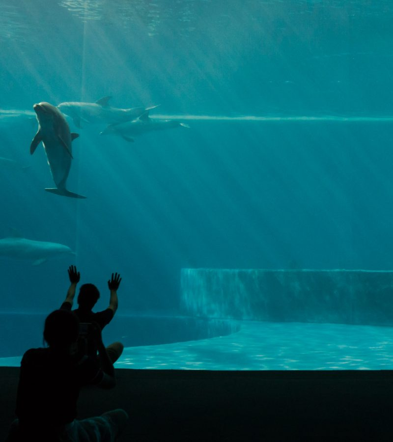Canada to ban captive whales and dolphins