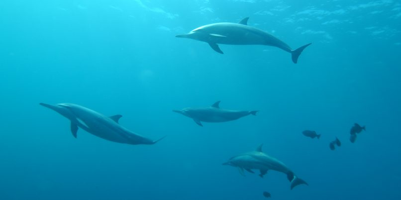 dolphins impacted by climate change